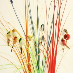 6 decorative birds with gras