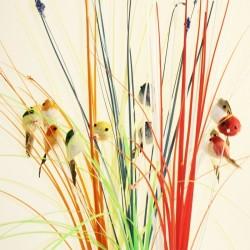 Gräs med fågel