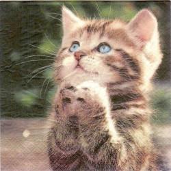 Matservett Katt
